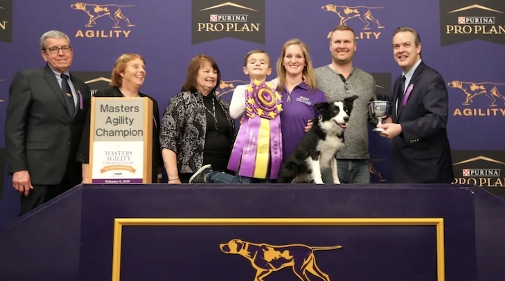 P!nk the Border Collie Named Westminster Agility Champion