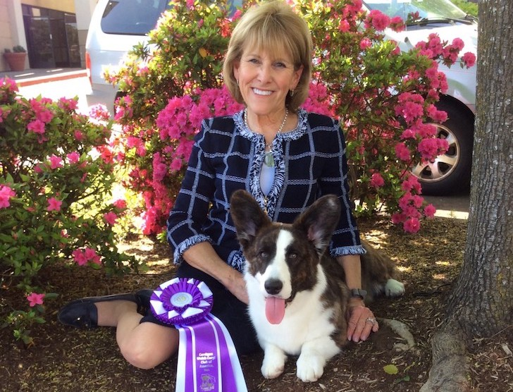 Cardigan Welsh Corgi Whose Kennel Flooded Competes At Westminster
