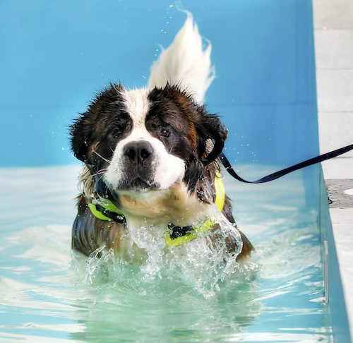 Hydrotherapy For Dogs A Growing Trend In Canine Physical Therapy