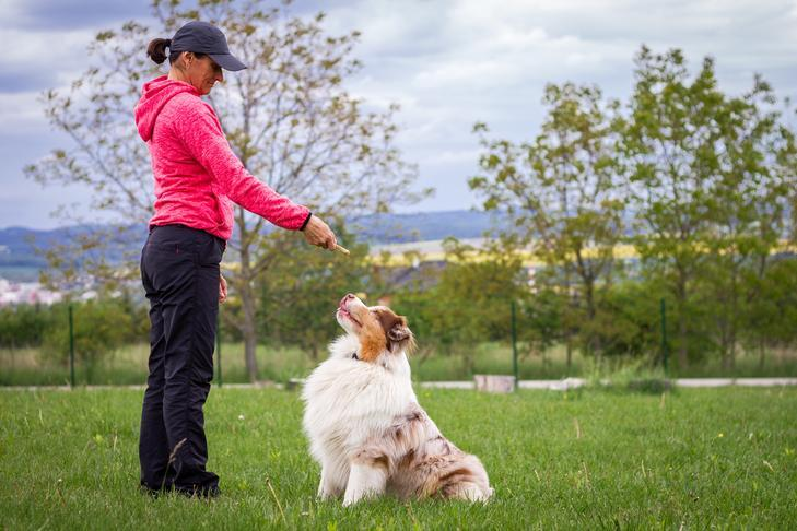 How To Become A Dog Trainer: Things To Know About Dog Training