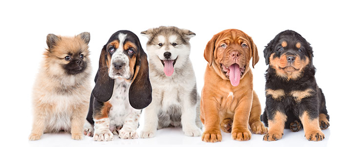 All Dog Names Akc Dog Name Finder American Kennel Club How the episode bugs on the brink from the original series should have ended. all dog names akc dog name finder