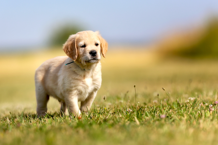 It's a Dog's Life! - カバー