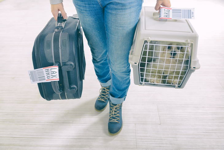 small dog in pet carrier for airline travel
