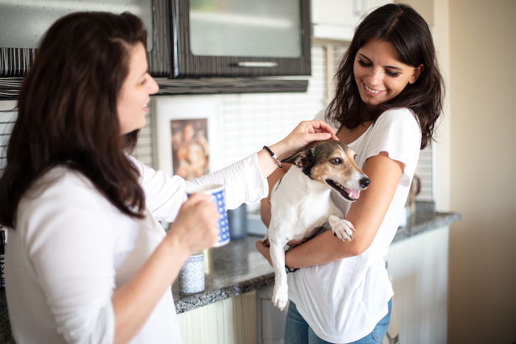 Happy free time with beloved dog. Beautiful young woman and friend staying indoor smiling and holding cute Jack Russell. Happy pets friendship emotion concept