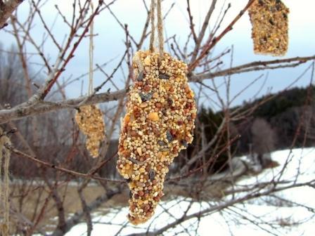 Bird Seed Treats Recipe