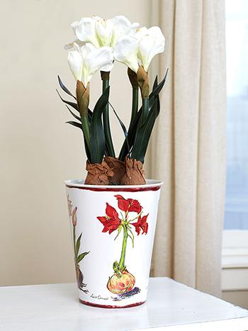 Amaryllis French Bucket