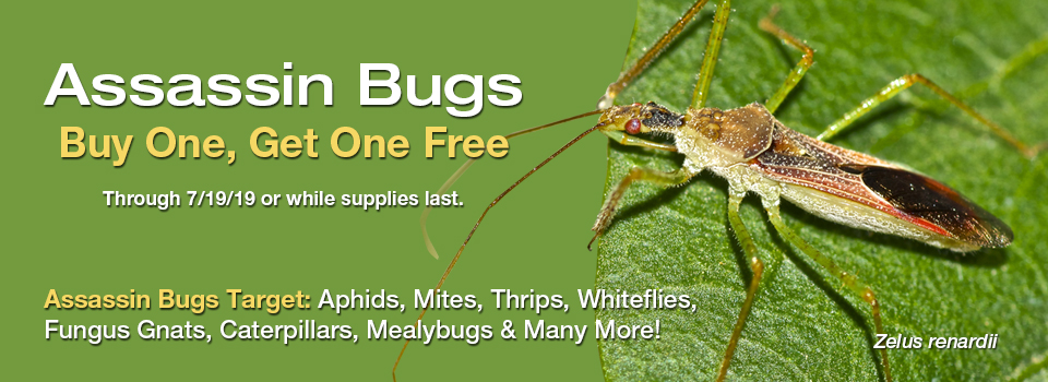Assassin Bugs Buy One Get One Free
