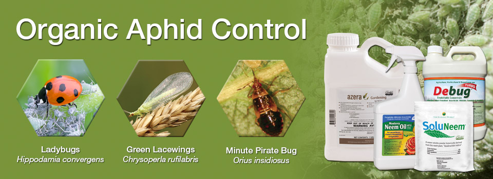 Organic Aphid Control
