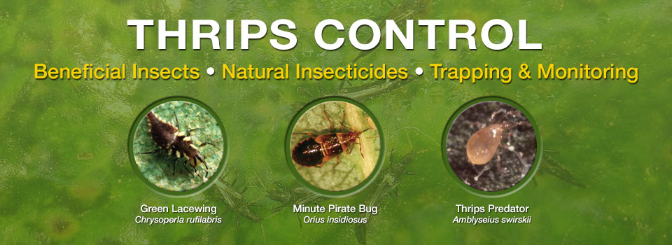 ARBICO Organics - Your Home For Biological Fly Control, Integrated Pest Management and Mite Control