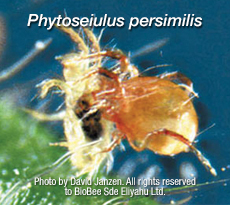 Predatory Mites Kill Pest Mites