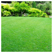 4 Steps for Successful Lawn Care