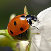 Attracting Beneficial Insects
