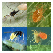Beneficial Insects - Specialists