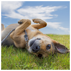 Flea & Tick Care for Animals
