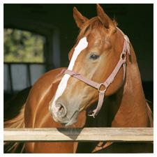 Horse & Livestock Pest Control