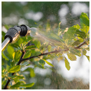 Horticultural Oils as Fungicides