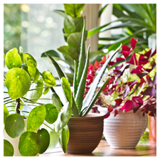 Help for Houseplants
