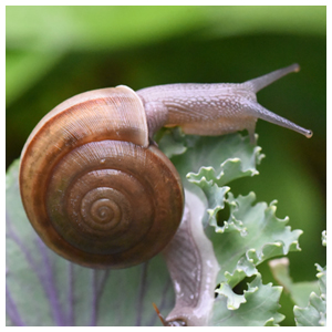 Slugs & Snails