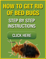Step by step bed bug removal