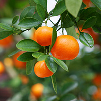 Fruit Tree Care for Gardens, Orchards, Farms