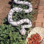 Snake Scarecrow