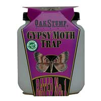 Gypsy Moth Trap by OakStump