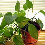 Helping Your Houseplants