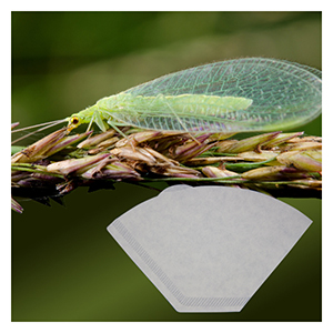 Green Lacewing Eggs - Hanging Release Pack