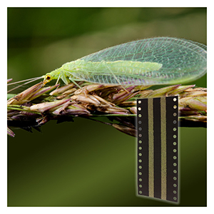Green Lacewing Eggs - On Hanging Cards