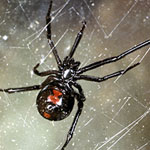 Spiders Home Pest Control