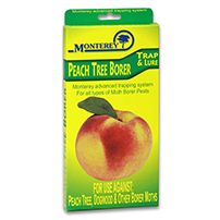Monterey Peach Tree Borer Trap