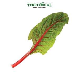 Territorial Seeds - Rhubarb Swiss Chard