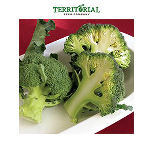 Territorial Seeds - Fiesta Broccoli