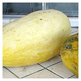 NS/S Melon Seeds - Esperanza de Oro