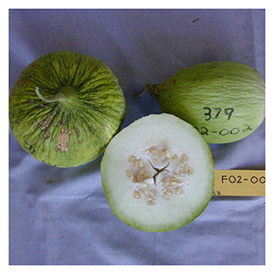 NS/S Melon Seeds - Hopi Casaba