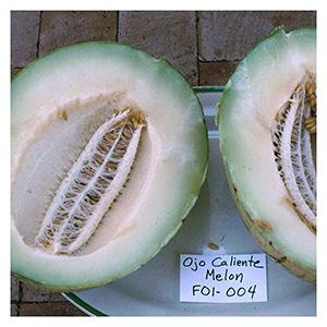 NS/S Melon Seeds - Ojo Caliente