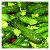 NS/S Squash Seeds - Grey Zucchini