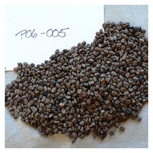 NS/S Tepary Bean Seeds - Kitt Peak Wild