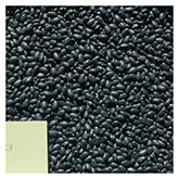 NS/S Bean Seeds - Tarahumara Frijol Negro