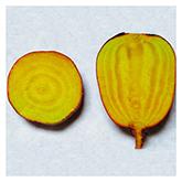 NS/S Beet Seeds - Golden