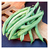 SERO Biodynamic® Seeds - Blue Lake Pole Bean