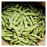 Territorial Seeds - Midori Giant Edamame Bean