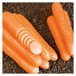 Territorial Seeds - Nantaise Narome Carrot