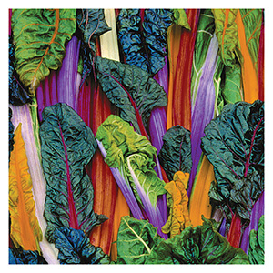 Territorial Seeds – Five Color Silverbeet Swiss Chard