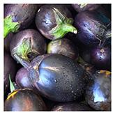 SERO Biodynamic® Seeds - Bambino Eggplant