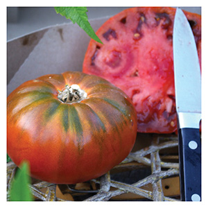 Territorial Seeds - Cosmonaut Volkov Tomato