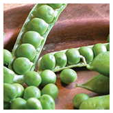 Territorial Seeds – Green Arrow Peas