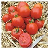 Territorial Seed – Stupice Tomato
