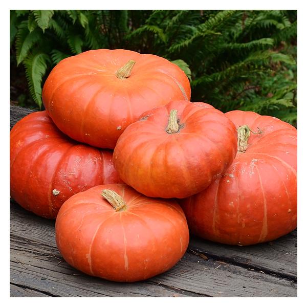 Territorial Seeds – Cinderella Pumpkin