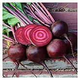 Territorial Seeds - Lutz Green Leaf Beet